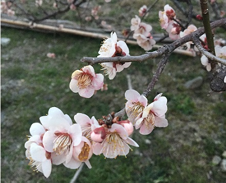 春分の日♪